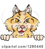 Clipart Of A Grinning Bobcat Peeking Over A Sign Royalty Free Vector Illustration