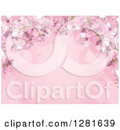 Clipart Of A Pink Background Of Cherry Blossoms Silhouetted Ferns And Text Space Royalty Free Vector Illustration