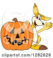 Clipart Of A Happy Kangaroo School Mascot Character Waving By A Halloween Jackolantern Pumpkin Royalty Free Vector Illustration by Toons4Biz