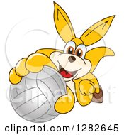 Clipart Of A Happy Kangaroo School Mascot Character Holding Up Or Catching A Volleyball Royalty Free Vector Illustration by Toons4Biz