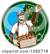 Clipart Of A Retro Woodcut Male Fruit Picker Harvesting Oranges In A Green And Blue Circle Royalty Free Vector Illustration