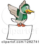 Clipart Of A Happy Mallard Duck School Mascot Character Flying With A Blank Sign Royalty Free Vector Illustration
