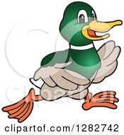 Clipart Of A Happy Mallard Duck School Sports Mascot Character Running Royalty Free Vector Illustration by Toons4Biz
