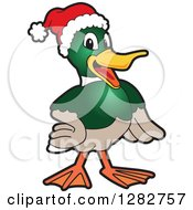 Clipart Of A Happy Christmas Mallard Duck School Mascot Character Wearing A Santa Hat Royalty Free Vector Illustration by Toons4Biz