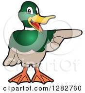 Clipart Of A Happy Mallard Duck School Mascot Character Pointing To The Right Royalty Free Vector Illustration by Toons4Biz