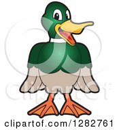 Happy Mallard Duck School Mascot Character Smiling