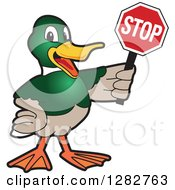 Clipart Of A Happy Mallard Duck School Mascot Character Holding A Stop Sign Royalty Free Vector Illustration