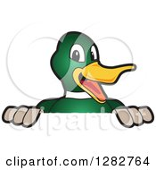 Clipart Of A Happy Mallard Duck School Mascot Character Smiling Over A Sign Royalty Free Vector Illustration by Toons4Biz