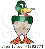 Clipart Of A Happy Mallard Duck School Mascot Character With Folded Wings Royalty Free Vector Illustration by Toons4Biz