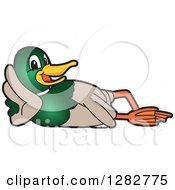 Clipart Of A Happy Mallard Duck School Mascot Character Resting On His Side Royalty Free Vector Illustration by Toons4Biz