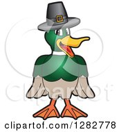 Clipart Of A Happy Mallard Duck School Mascot Character Wearing A Thanksgiving Pilgrim Hat Royalty Free Vector Illustration by Toons4Biz