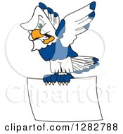 Clipart Of A Tough Seahawk School Mascot Character Flying With A Blank Sign Royalty Free Vector Illustration