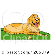 Happy Golden Retriever Dog Resting In Grass By A Tennis Ball