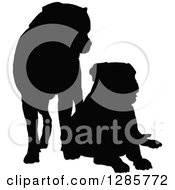 Clipart Of Black Silhouetted Mastiff Dogs Standing And Resting Royalty Free Vector Illustration by Maria Bell