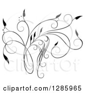 Clipart Of A Black And White Scroll Design Element With Floral Swirls 5 Royalty Free Vector Illustration