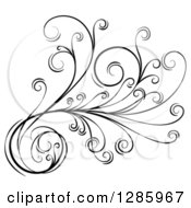 Clipart Of A Black And White Scroll Design Element With Floral Swirls 2 Royalty Free Vector Illustration