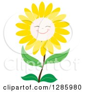 Happy Yellow Daisy Or Sunflower Smiling