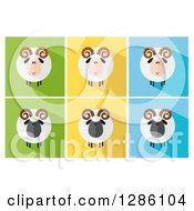 Clipart Of Modern Flat Designs Of Round Fluffy White And Black Ram Sheep On Colorful Tiles Royalty Free Vector Illustration by Hit Toon