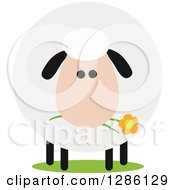 Clipart Of A Modern Flat Design Round Fluffy Sheep Eating A Daisy Flower Royalty Free Vector Illustration by Hit Toon