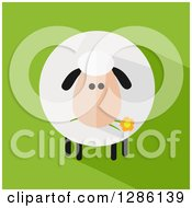 Modern Flat Design Round Fluffy Sheep Eating A Daisy Flower With A Shadow On Green