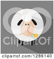 Clipart Of A Modern Flat Design Round Fluffy White Sheep Eating A Daisy Flower On Gray Royalty Free Vector Illustration