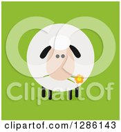 Clipart Of A Modern Flat Design Round Fluffy Sheep Eating A Daisy Flower On Green Royalty Free Vector Illustration by Hit Toon