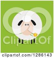 Modern Flat Design Round Fluffy Sheep Eating A Daisy Flower On Green