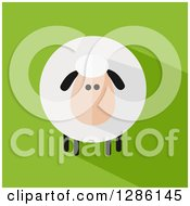 Clipart Of A Modern Flat Design Round Fluffy Sheep With A Shadow On Green Royalty Free Vector Illustration by Hit Toon