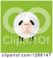 Clipart Of A Modern Flat Design Round Fluffy Sheep On Green Royalty Free Vector Illustration by Hit Toon