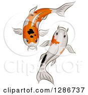 Clipart Of A Pair Of Calico Koi Fish Swimming Royalty Free Vector Illustration by BNP Design Studio