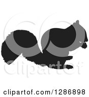 Clipart Of A Black Silhouetted Squirrel Eating A Nut Royalty Free Vector Illustration by Maria Bell