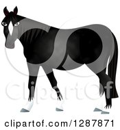 Black Horse With White Boots