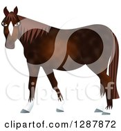 Brown Horse With White Boots