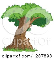 Clipart Of A Curved Mature Tree With A Green Canopy Royalty Free Nature Vector Illustration by Pushkin