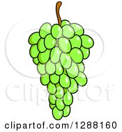 Clipart Of A Bunch Of Bright Green Grapes Royalty Free Vector Illustration