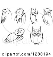 Clipart Of Black And White Sketched Owls Royalty Free Vector Illustration