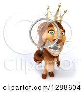 Clipart Of A 3d Lion King Looking Up Through A Magnifying Glass Royalty Free Illustration