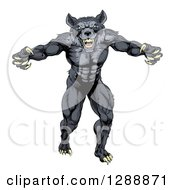 Clipart Of A Muscular Aggressive Black Wolf Man Attacking Royalty Free Vector Illustration