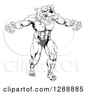 Clipart Of A Black And White Muscular Vicious Bear Man With Claws Extended Royalty Free Vector Illustration