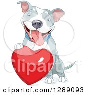 Animal Clipart Of A Cute Happy Gray And White Pit Bull Dog Resting A Paw On A Red Love Heart Royalty Free Vector Illustration