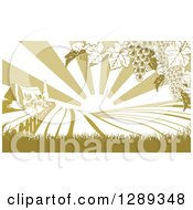 Farm House And Rolling Hills With Winery Grape Vines And Sun Rays In Green And White