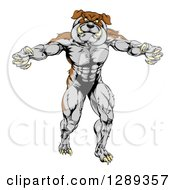 Clipart Of A Muscular Brown And Gray Bulldog Monster Man Mascot Standing Upright Royalty Free Vector Illustration by AtStockIllustration