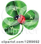 Lady Bug Nestled In The Center Of A Green Shamrock Clover