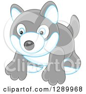 Clipart Of A Gray Toy Husky Dog Royalty Free Vector Illustration by Alex Bannykh
