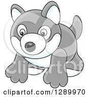 Clipart Of A Gray And White Toy Husky Dog Royalty Free Vector Illustration