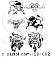 Clipart Of Black And White Longhorn Bulls Royalty Free Vector Illustration