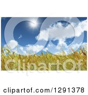 Clipart Of A Background Of 3d Golden Wheat In A Field Under A Blue Sunny Sky Royalty Free Illustration