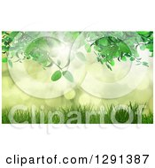 Clipart Of A 3d Green Vine Over Grass And Bokeh Flares With Sunshine Royalty Free Illustration by KJ Pargeter