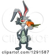 Clipart Of A Cartoon Gray Rabbit Eating A Carrot Royalty Free Vector Illustration