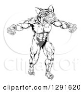 Clipart of a Black and White Vicious Muscular Tiger Man ...